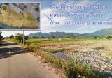 Land in Lom Kao, Phetchabun - DDproperty.com