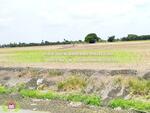ขาย ที่ดิน 174 ไร่ 156 ตารางวา ลาดหลุมแก้ว ปทุมธานี