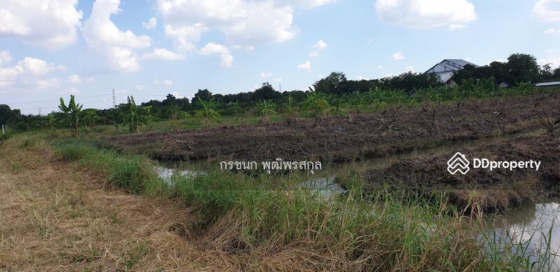 ที่ดินร่องสวน 5 ไร่ ต.บึงบา อ.หนองเสือ จ.ปทุมธานี #80959294