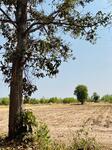 R090-046 ขายที่ดินถูก  5 ไร่  1 งาน 92 ตารางวา ตำบลบ้านเหล่า  อำเภอบ้านฝาง  จังหวัดขอนแก่น