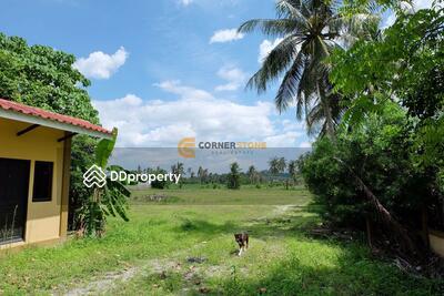 ให้เช่า - 6 Rai 223 wah² for Sale Pong Mabprachan