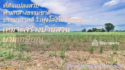 ขาย - ขายที่ดินสวย อ. หนองหญ้าไซ สุพรรณบุรี 1 ไร่ บรรยากาศดีทำเลดีมาก เหมาะสร้างบ้านสวนเกษตรยามเกษียณ