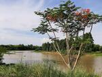 ขายที่ดินบ้านสร้างติดแม่น้ำบางปะกง 1 ไร่ ถมแล้วพร้อมสวนผลไม้บางส่วนแถมที่งอก 100 ตรว. จ. ปราจีนบุรีPRA-261