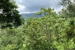 ที่ดิน สวนผลไม้ผสม ต. เขาแก้ว อ. ลานสกา - 920121036-36