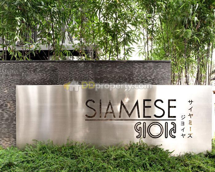 Siamese Gioia (ไซมิส จอยญ่า) #5673662